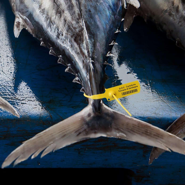 Eracle sigillo regolabile per denominazione alimenti tonno pesce